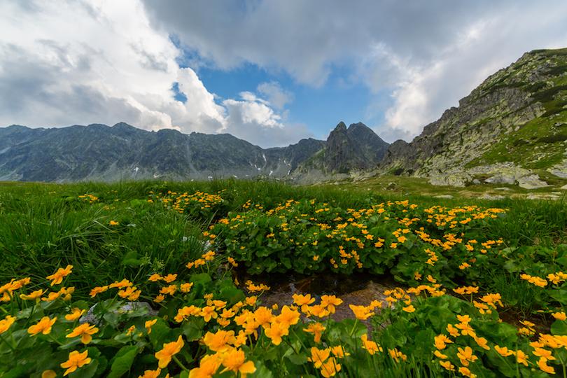 Alpii Transilvaniei